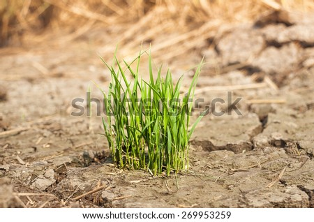 grass in the soil - stock photo
