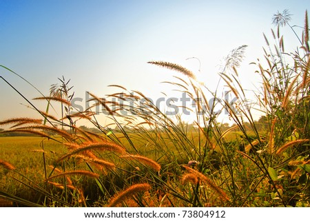 Grass in the wind in the morning