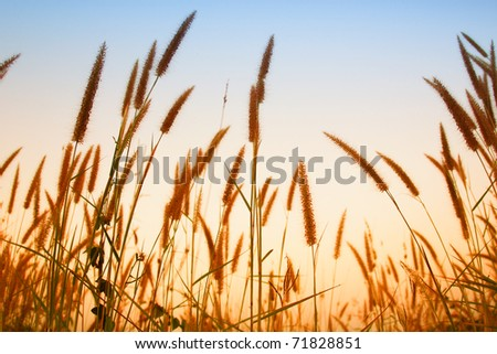 grass in wind - stock photo