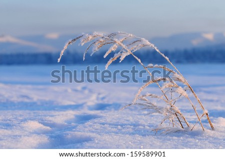 Grass in winter - stock photo