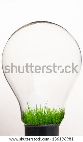 Grass inside light bulb against white background - stock photo