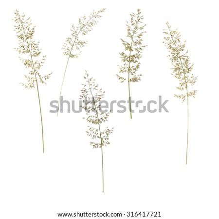 Grass isolate on white - stock photo