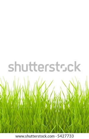 grass isolated on a white background for a copy-space - stock photo