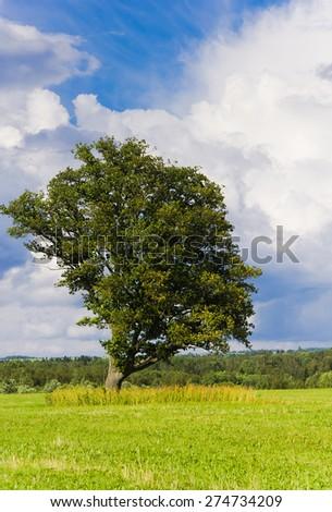 Grass Land Scenic View  - stock photo