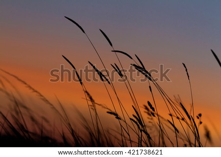 Grass landscape in the wonderful sunset light - stock photo