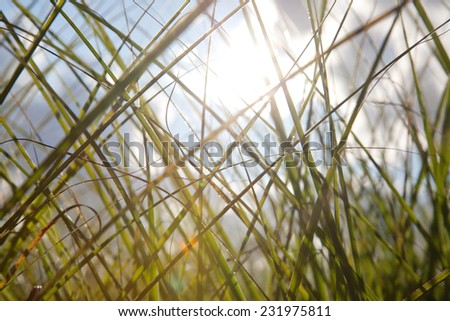 Grass landscape with blue sky and clouds.