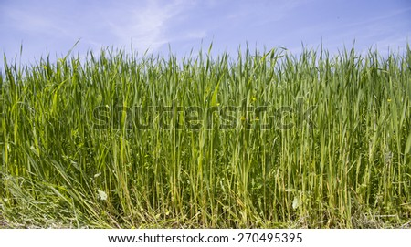 grass lawn and sky for background - stock photo