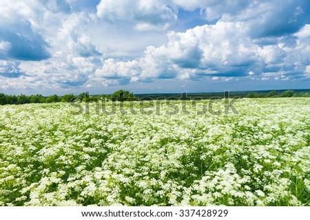 Grass Lawn Field Freedom  - stock photo