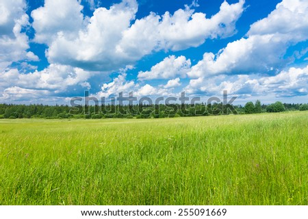 Grass Lawn Fresh Landscape  - stock photo