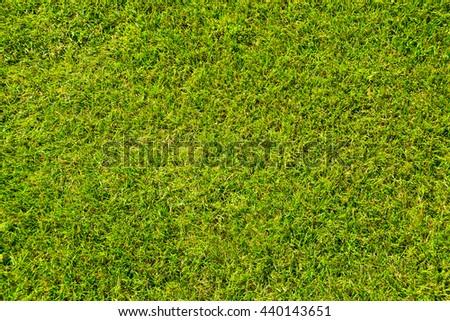 Grass lawn natural texture. Green grass background - stock photo