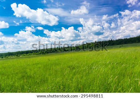 Grass Lawn Nobody Outside  - stock photo