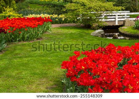 grass lawn with with red tulips  in dutch garden 'Keukenhof', Holland - stock photo