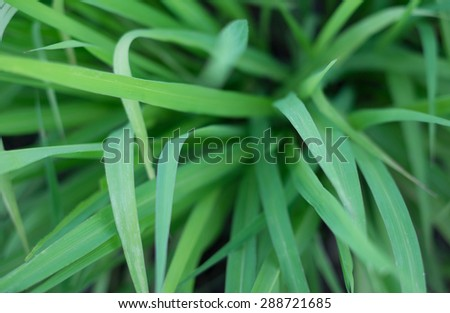 grass leaf background, very shallow depth of field - stock photo