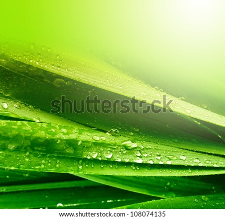 grass leaf with water drops - stock photo
