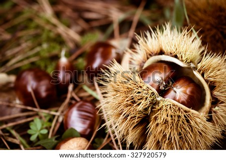 grass leaves and chestnuts close up - nature backgrounds and textures