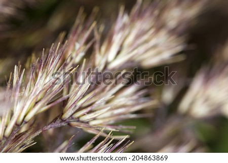 Grass macro - stock photo