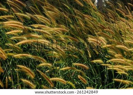 grass meadow flower - stock photo