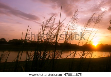 Grass meadow silhouette at sunset in park