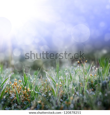 Grass morning nature background - stock photo