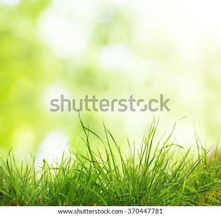 grass natural background with green abstract bokeh, selective focus - stock photo
