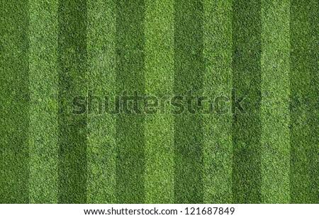grass of field - stock photo