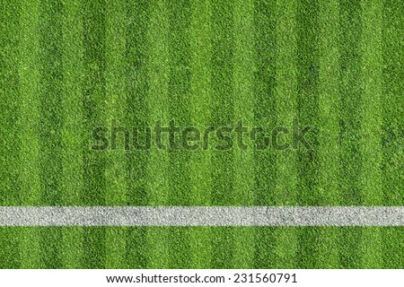 grass of sport field