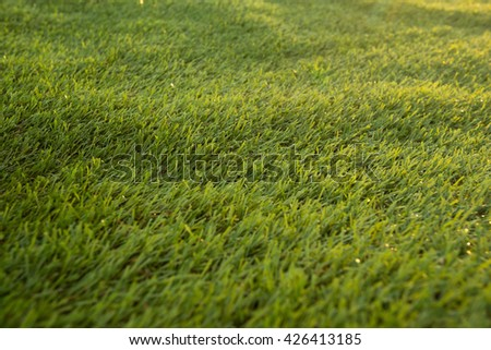 Grass on a golf course green grass on a sunny day. - stock photo