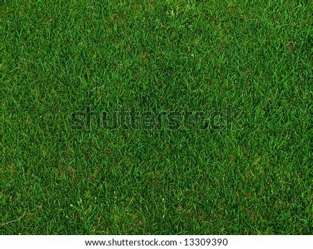 Grass on a golf field - stock photo