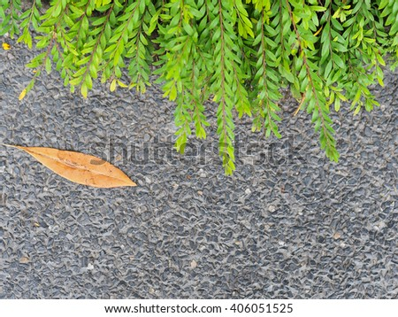 grass on footpath side with dry leaf - stock photo