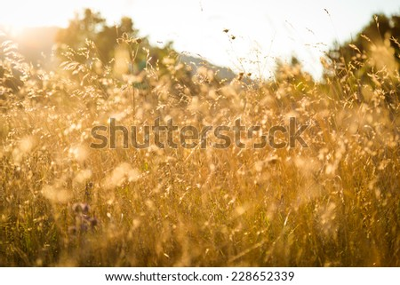 Grass on meadow in sunset - stock photo