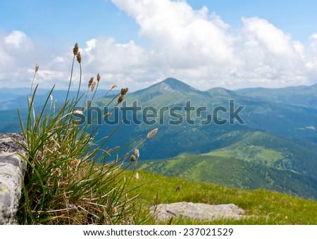 Grass on mountain meadow on Carpathians background, Ukraine - stock photo