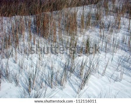 grass on sand dune - stock photo