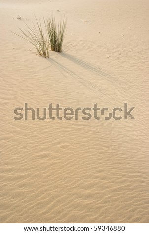 Grass on sand dune - stock photo
