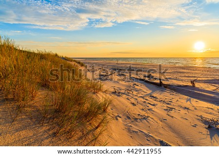 Grass on sand dunes at sunset time on a beach in Leba, Baltic Sea, Poland - stock photo