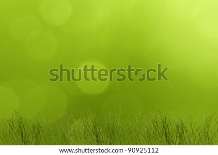Grass on  sunny summer day