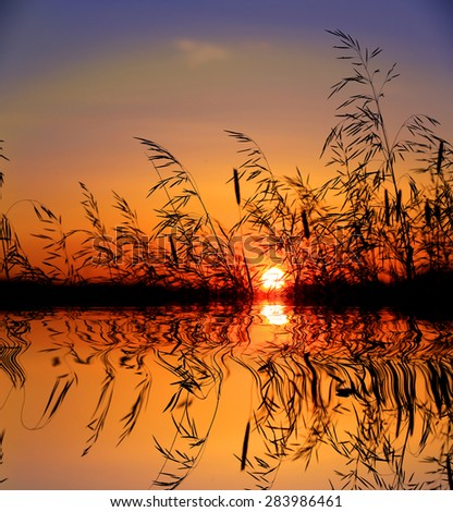 grass on sunset sky background over water
