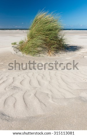 Grass on the beach with sand patterns - stock photo
