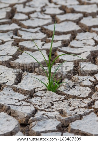 grass on the cracked land - stock photo