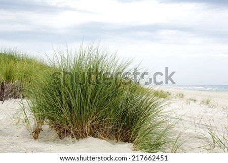 Grass on the dunes at the Baltic Sea coast in Jurata in Poland - stock photo