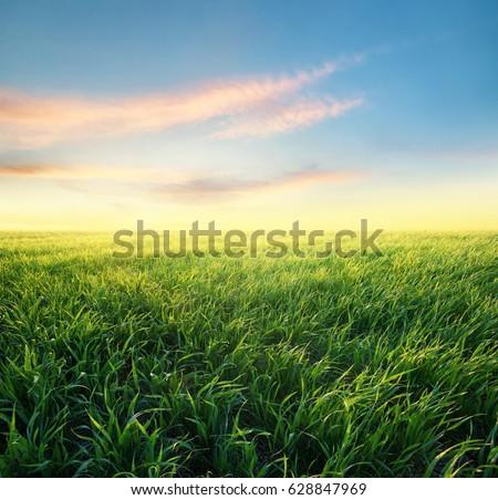 Grass in the Wind (Blender 3d) - YouTube