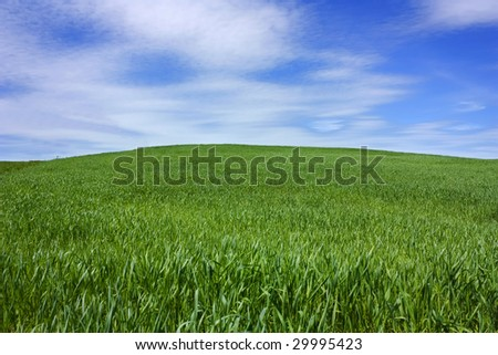 grass on the hill, blue sky - stock photo