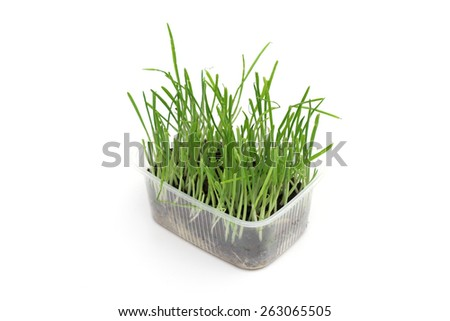 grass on the white background - stock photo