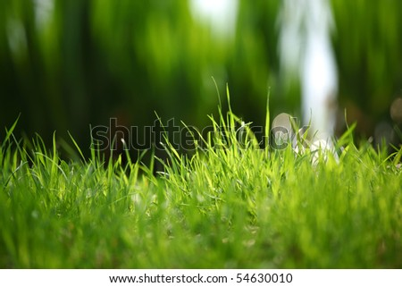 grass on water - stock photo