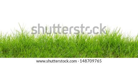 grass on white background  - stock photo