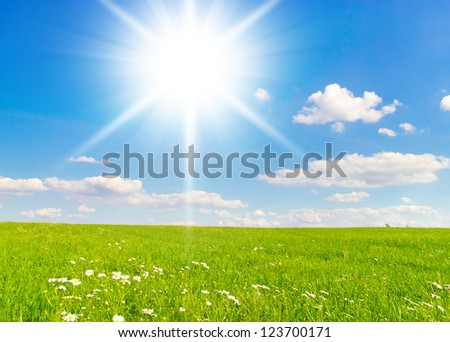 Grass Outdoor Sunshine Scene
