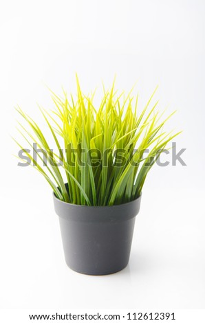 grass plant for indoor