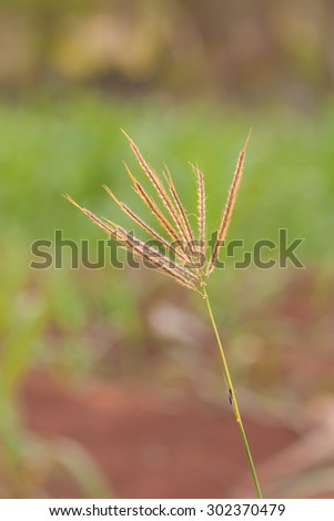 Grass plume with rim light - stock photo