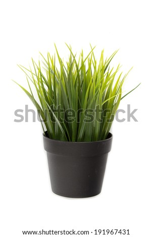 Grass pot on isolated background