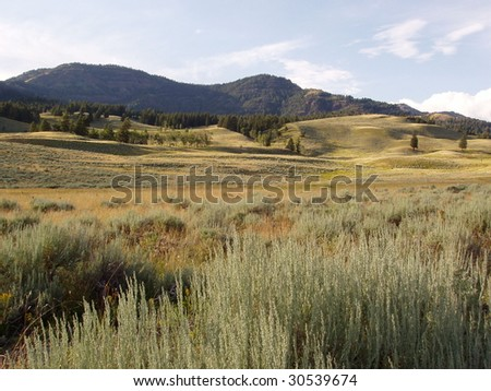 grass prairie Yellowstone Park - stock photo