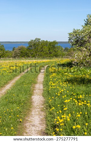 Grass road over a flowering meadow - stock photo
